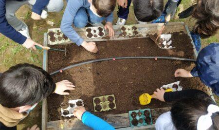 Aprendemos en Primaria con nuestro propio huerto